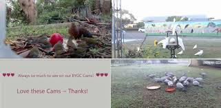 loving our new cam views page 3 backyard galah cam