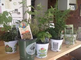 indoor herb garden for the shoebox apartment