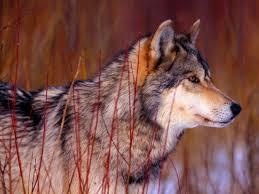 september 2010 howling for justice