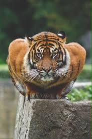 dr w on y all i m dead tiger look like he do push