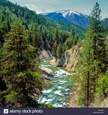 Montana forest images Fish creek in lolo national forest near alberton montana stock jpg