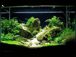 Aquascaping Techniques 42 Best Nature Aquascaping Style Tag Images On Pinterest