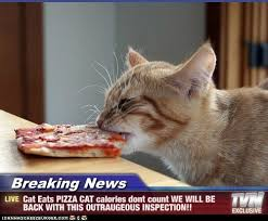 Silly Cat Memes - cute cat pics these breaking news cat memes are hilarious 11