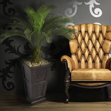 laura ashley home design reviews beachcrest home brookings cane palm tree in pot reviews wayfair