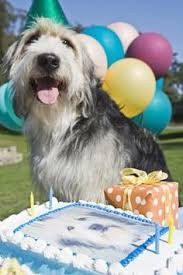happy birthday lola doggy cake recipe dog birthday recipe