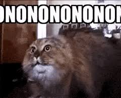Funny Meme Gifs - funny meme gifs search find make share gfycat gifs