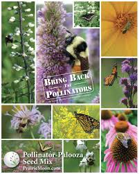 native plant seeds for sale prairie moon nursery
