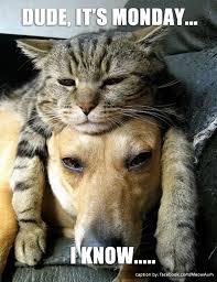 Monday Cat Meme - cat memes meow aum part 15