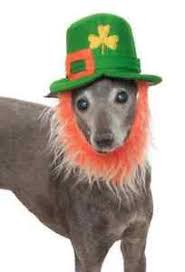 leprechaun hat beard st patrick u0027s day halloween pet dog cat