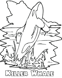 killer whale coloring sheets page pages orca printable free