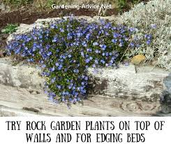 Best Plants For Rock Gardens Plants For Rock Gardens Frivforkid Club