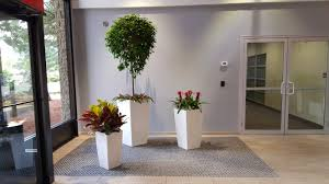 interior design fresh interior plant maintenance services