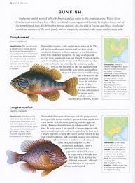 freshwater fish the illustrated world encyclopedia of freshwater fish and river