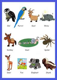 amazing animal pictures for children 100 1397