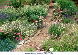 gravel path through cottage garden with delphinium stock photo