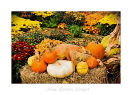 happy thanksgiving to my canadian friends and visitors flickr