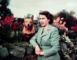 queen elizabeth dog are the queen s corgis called all about elizabeth ii s