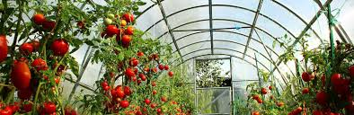 how to build a greenhouse homesteading simple self sufficient