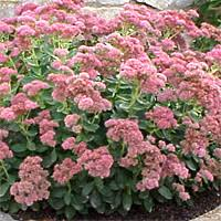 or this pink landscape pinterest late summer plant care and