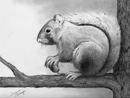 awesome sketches of animals 1000 images about art pencil drawing