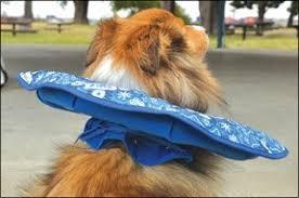 Comfortable Dog Comfortable Dog Cone Alternatives Whole Dog Journal