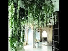 indoor vine plant indoor vine plant youtube