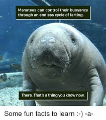 Manatee Meme - manatees can control their buoyancy through an endless cycle of