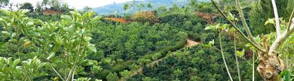 On The Path To Farm Sustainability Rainforest Alliance