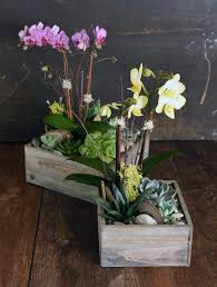 ciao orchid u0026 succulent garden a beautiful statement to