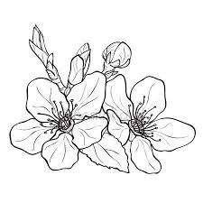 fiori disegni scarica fiori fiori di ciliegio disegno illustrazione stock