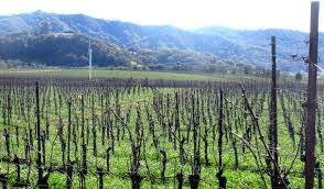 Paso Robles Map Paso Robles Wineries Ca Top Tips Before You Go With Photos