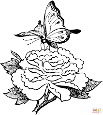 butterfly on a flower coloring page free printable coloring pages