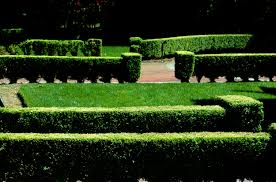 Garden Hedges Types Evergreens For Privacy Screens