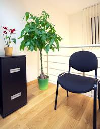 what are the best plants for offices and cubicles