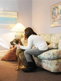 Comfort Pet Certification 26 Best Human Animal Connection Images On Pinterest Therapy