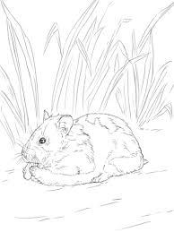 Coloriage  Hamster doré qui mange  Coloriages à imprimer gratuits