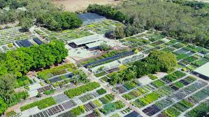 australian native plant nursery brisbane nsy mid shot jpg