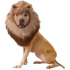 spirit halloween florida animal planet lion dog costume buycostumes com