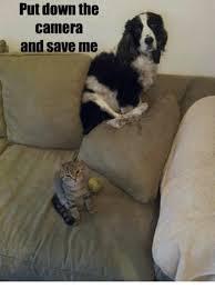 Save Me Meme - save me cat meme me best of the funny meme