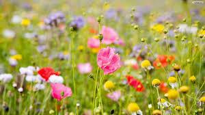 Flower Wallpaper Flower Wallpaper Border