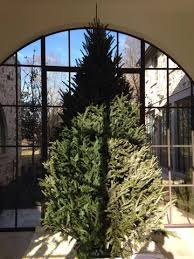 premium fraser fir tree delivery included clements