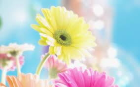 வால்பேப்பர்கள் ( flowers wallpapers ) - Page 20 Images?q=tbn:ANd9GcS9diaElLld6kVwe8LzRlXFezwEZCbJwk1m84wGjwcTJ2EE2zw_