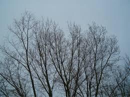 bare tree tops 1 by falln stock on deviantart