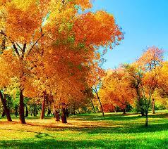 imagenes de otoño para fondo de escritorio descargar la imagen en teléfono paisaje árboles hierba otoño