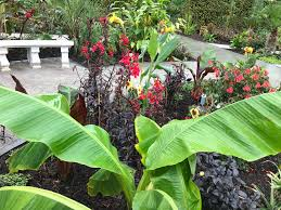 how to create your own tropical garden in a uk climate bt