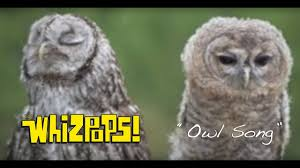 the owl song by the whizpops youtube