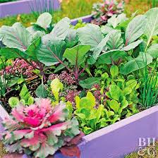 small kitchen garden ideas small space vegetable garden plan ideas better homes gardens