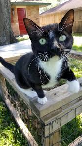 les 20528 meilleures images du tableau cute cats and kittens sur