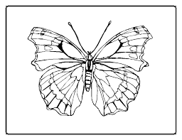 impressive butterfly color free downloads 4680 unknown