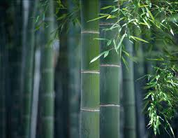 the roots of feng shui sacred plants and trees of feng shui